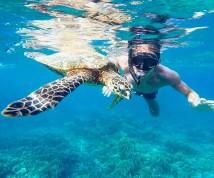 Tartaruga ad Ibiza