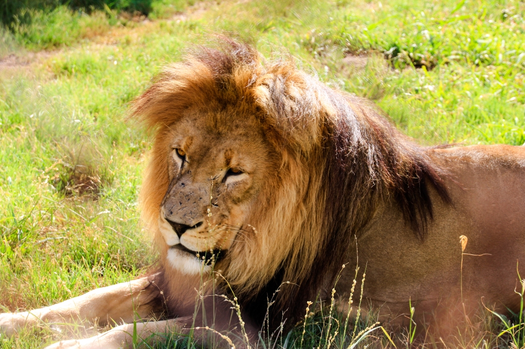 leone.jpg